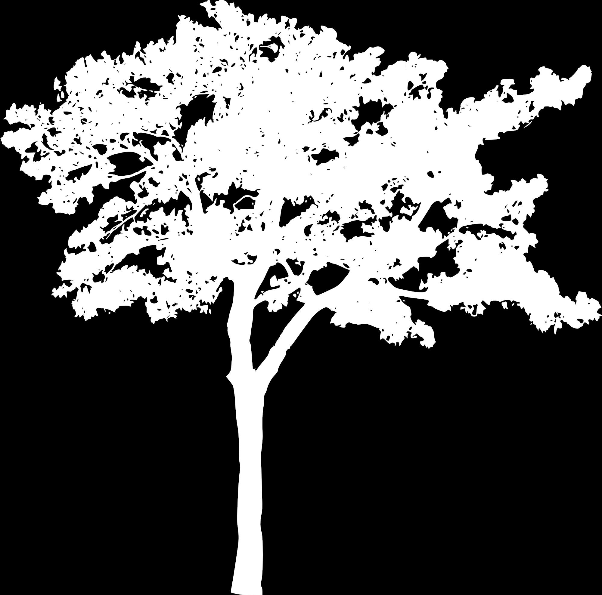 EdgeDetectPRO_tree.jpg