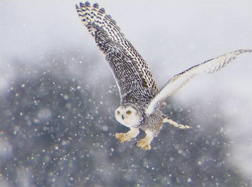 Aberration owl example